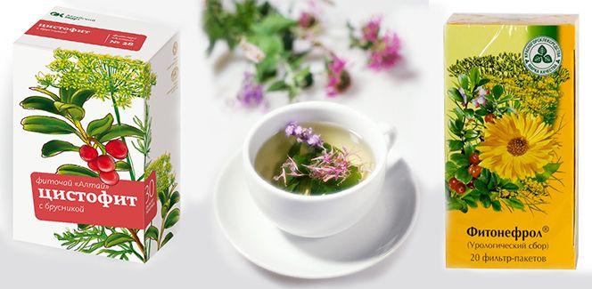 Травы при цистите у женщин: урологический сбор, чай от воспалении мочевого пузыря